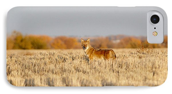 Coyote On The Hunt IPhone Case