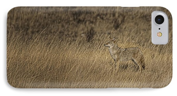 Coyote Standing In Field Of Dried Phone Case by Roberta Murray