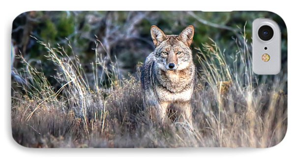 Coyote Stare Down IPhone Case