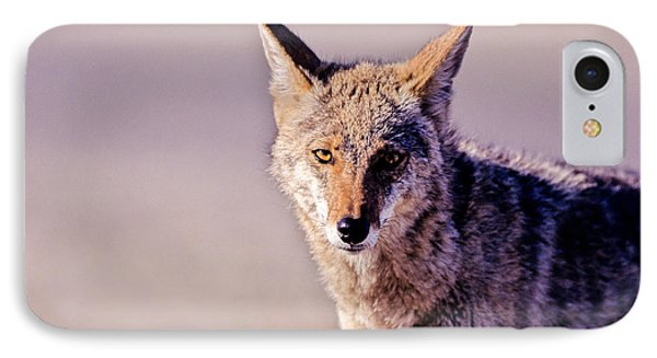 Coyote Stares IPhone Case by Martha Marks