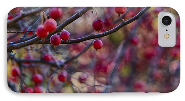 Crab Apples 3 IPhone Case by Scott Campbell