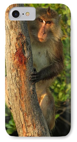 Crab Eating Macaque Phone Case by Ramona Johnston