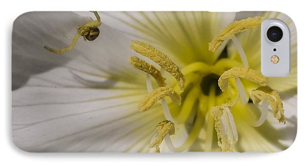Crab Spider And Dune Evening Primrose IPhone Case by Lee Kirchhevel