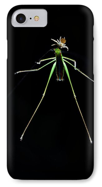 Crab Spider And Katydid IPhone Case by Melvyn Yeo