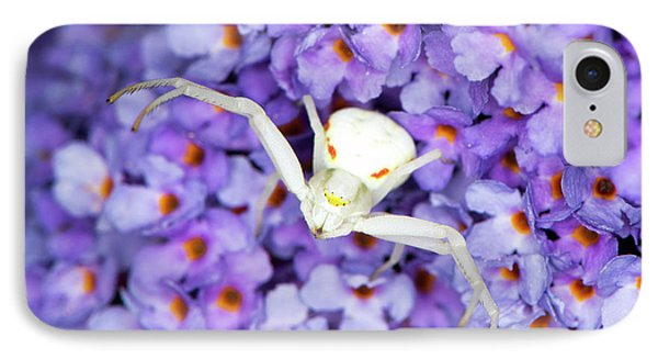 Crab Spider On A Buddleia Flower IPhone Case by Louise Murray