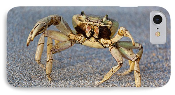 Crabby IPhone Case by Michelle Wiarda