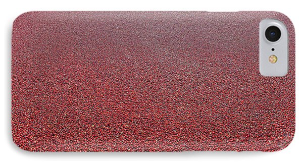 Cranberries Phone Case by Olivier Le Queinec