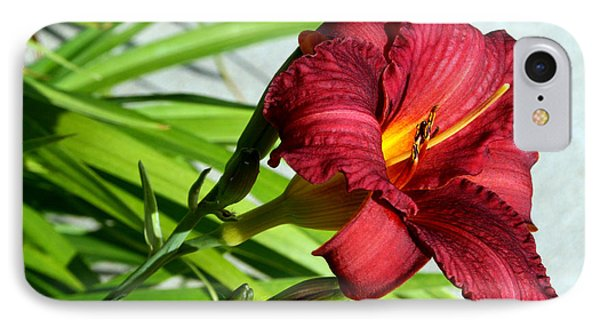 Cranberry Colored Lily IPhone Case by Kay Novy