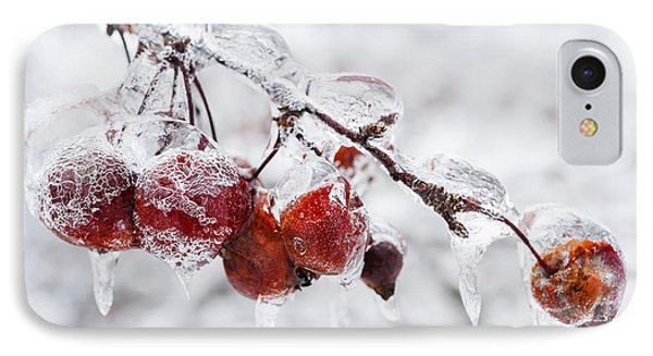 Crab Apples On Icy Branch IPhone Case by Elena Elisseeva