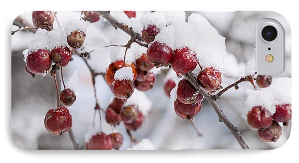 Crab Apples On Snowy Branch IPhone Case by Elena Elisseeva