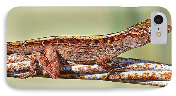 IPhone Case featuring the photograph Crawling Lizard by Cyril Maza