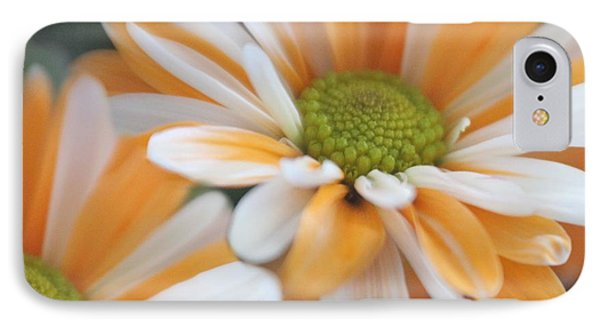 Creamsicle Daisies IPhone Case by Mary Lou Chmura