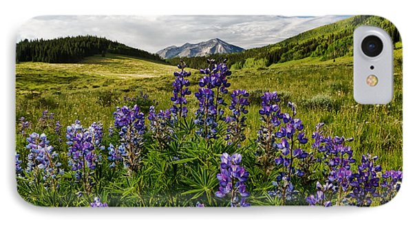 IPhone Case featuring the photograph Crested Butte Lupines by Ronda Kimbrow