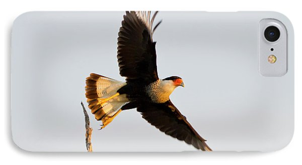 Crested Caracara (caricara Cheriway IPhone Case by Larry Ditto