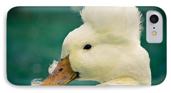 Crested Duck IPhone Case by Priya Ghose