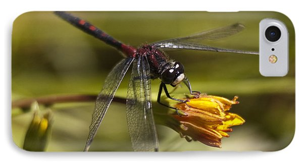 IPhone Case featuring the photograph Crimson-ringed  White Face Dragonfly On Flower by Lee Kirchhevel
