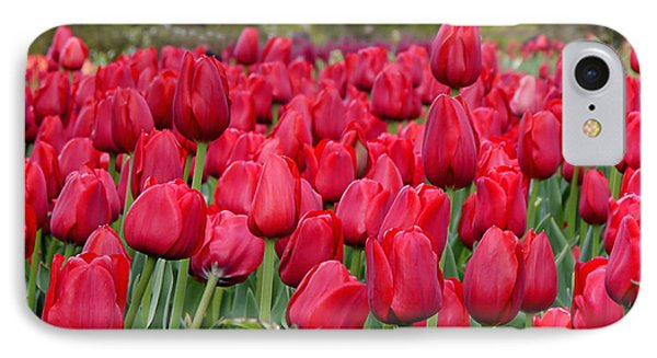 Crimson Tulips  IPhone Case by Richard Reeve