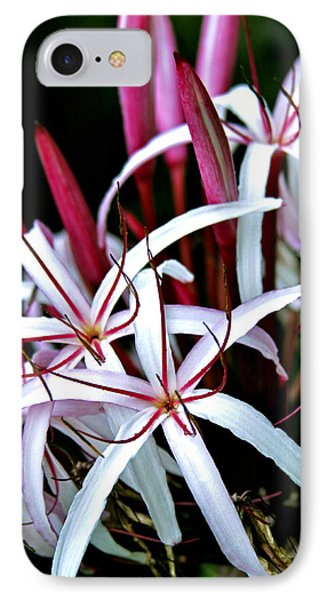 Crinum Asiaticum Spider Lily Hawaii Phone Case by Karon Melillo DeVega