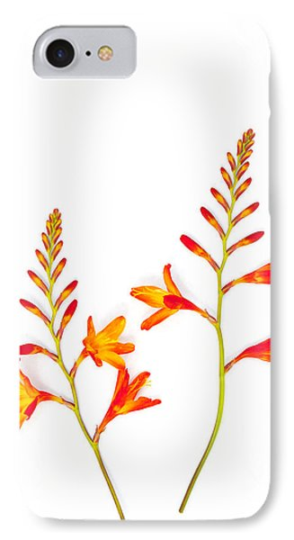Crocosmia On White IPhone Case by Carol Leigh