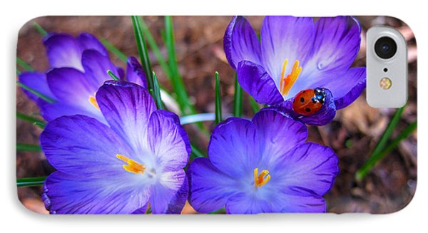 Crocus Flowers And Ladybug IPhone Case by Debra Thompson