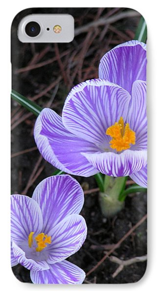 Crocus IPhone Case by John Wartman