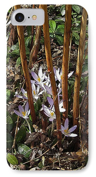 IPhone Case featuring the photograph Crocuses And Raspberry Canes by Donald S Hall
