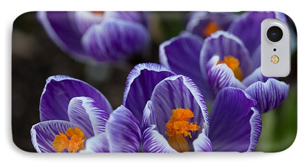 Crocuses IPhone Case by Angie Vogel
