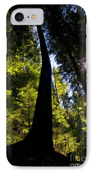 Crooked Tree Silohuette IPhone Case by Terry Elniski
