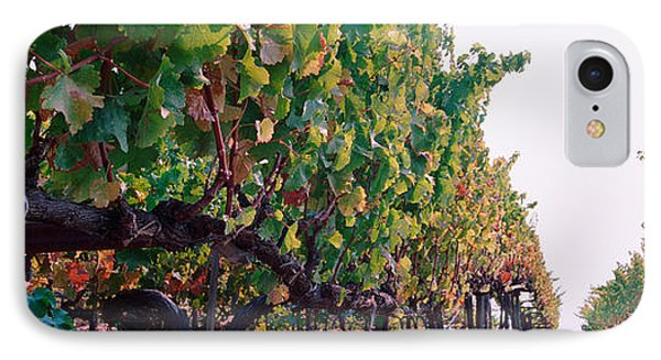 Crops In A Vineyard, Sonoma County IPhone Case by Panoramic Images