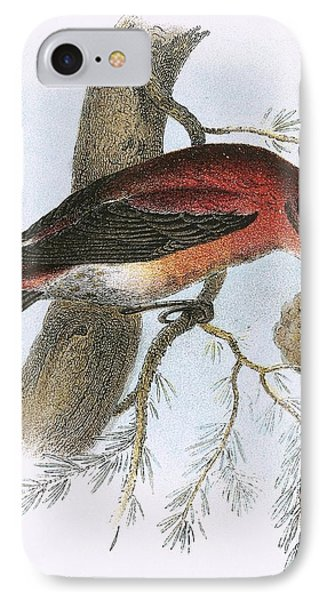 Crossbill IPhone 7 Case