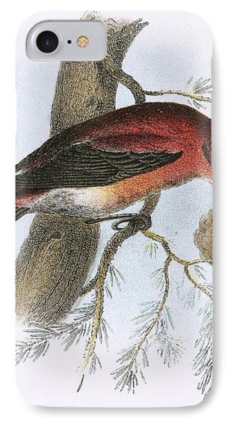 Crossbill IPhone 7 Case by English School