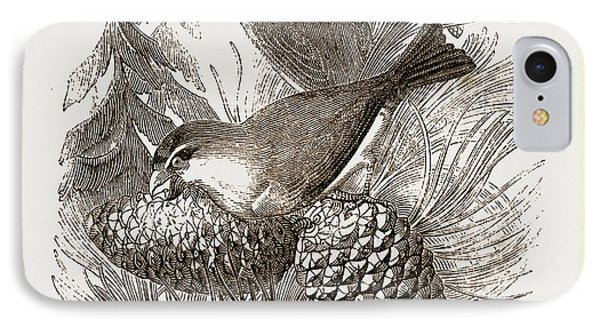 Crossbill iPhone 7 Case - Crossbills by Litz Collection