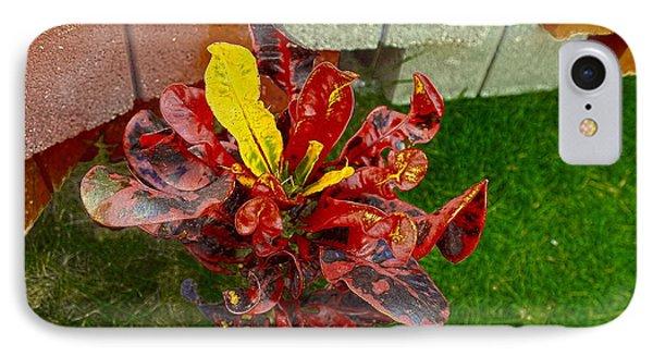 Croton Impressus Phone Case by Sandra Pena de Ortiz