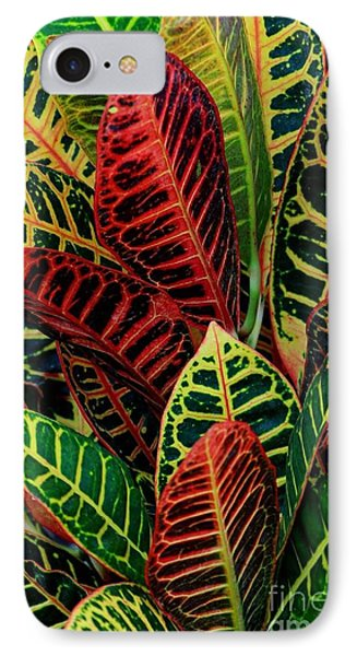 Croton Leafscape IPhone Case by Larry Nieland