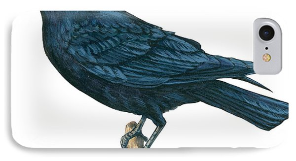 Crow IPhone Case by Anonymous