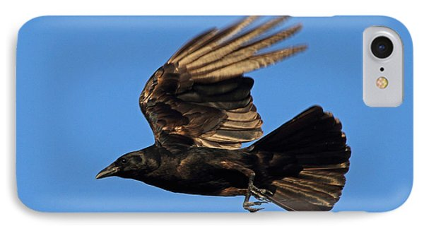 IPhone Case featuring the photograph Crow In Flight by Meg Rousher
