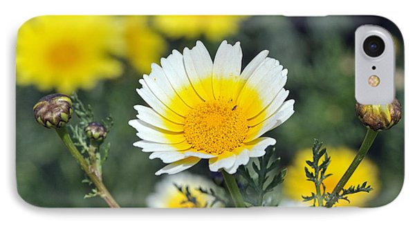 IPhone Case featuring the photograph Crown Daisy Flower by George Atsametakis