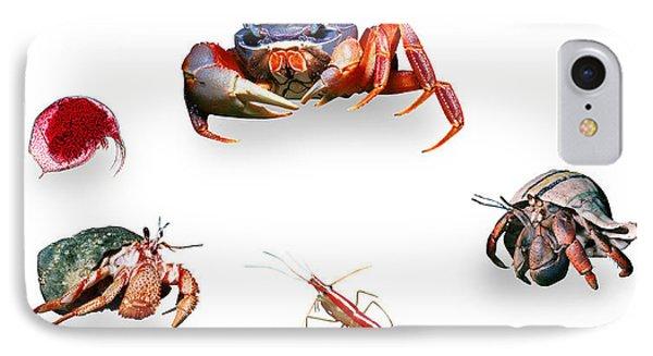 Crustaceans IPhone Case by Wernher Krutein