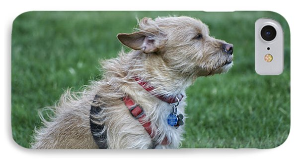 IPhone Case featuring the photograph Cruz Enjoying A Warm Gentle Breeze by Thomas Woolworth