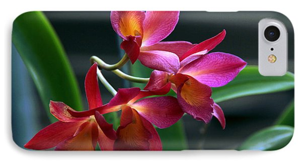 IPhone Case featuring the photograph Ctna New River Orchid by Greg Allore