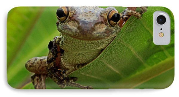 Cuban Tree Frog IPhone Case