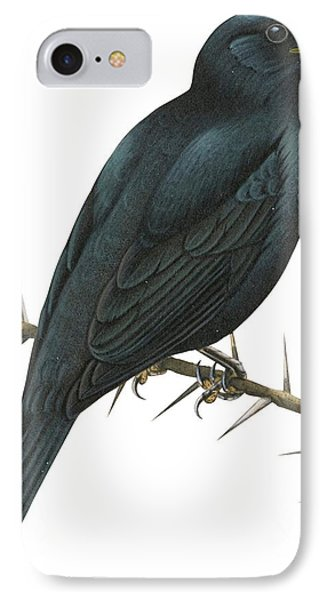 Cuckoo Shrike IPhone Case by Anonymous