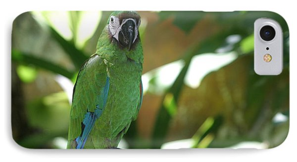 Curacao Parrot IPhone Case by Living Color Photography Lorraine Lynch