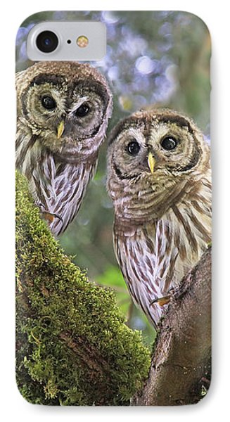 Curious Barred Owlets IPhone Case