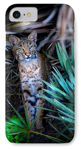 Curious Bobcat Phone Case by Mark Andrew Thomas