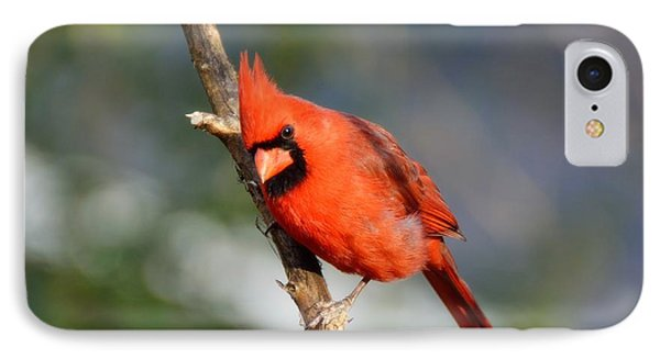 IPhone Case featuring the photograph Curious Cardinal by Lisa L Silva