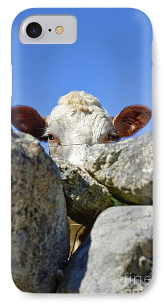 Curious Cow IPhone Case by John Greim