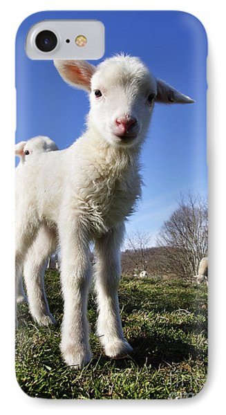 Curious Day Old Lambs Phone Case by Thomas R Fletcher