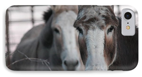 Curious Donkeys Phone Case by Lorri Crossno