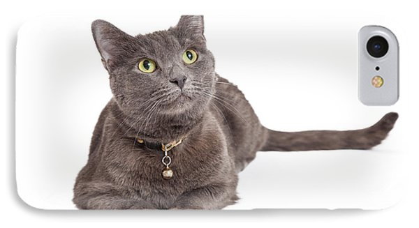 Curious Grey Domestic Shorthair Cat Looking Up IPhone Case